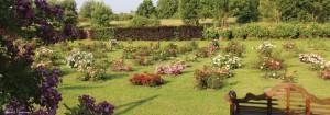 Jardin concours de roses nouvelles