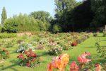Visites découvertes du jardin concours de roses nouvelles et de la roseraie de l'ancien Hôpital Saint-Jacques au Roeulx