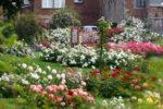 Les jardins concours de roses nouvelles et la roseraie de Saint-Jacques n'attendent que vous !