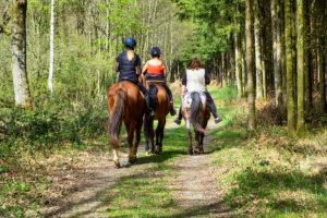 Promenade équestre au coeur des campagnes mignaultoises